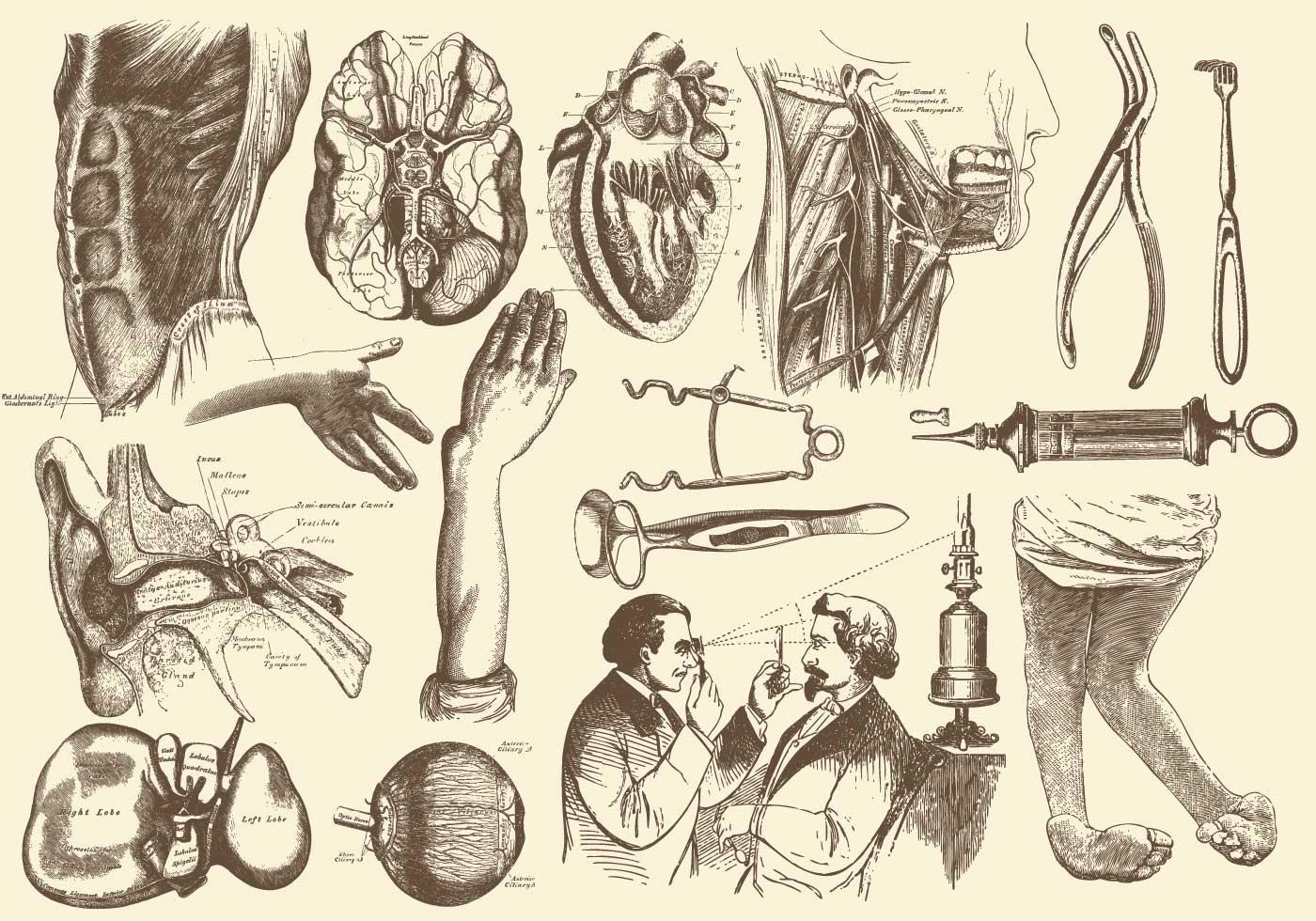 Sepia Anatomie und Gesundheitswesen Illustrationen - Kostenlose ...