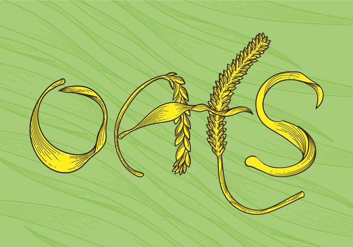 Illustration vectorielle gratuite d'avoine