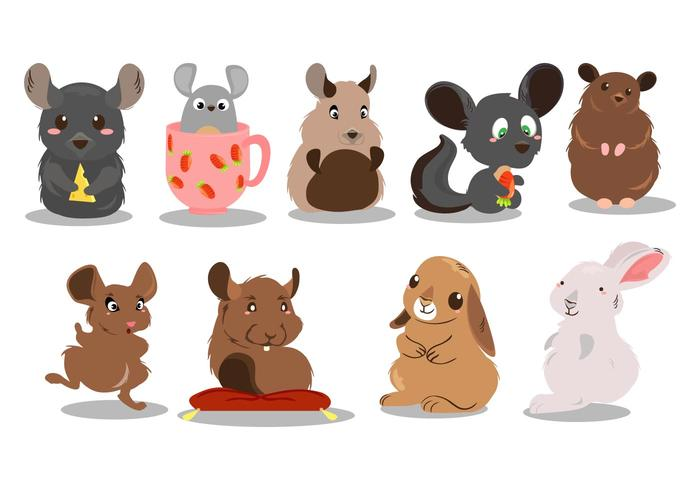 Vector Cute chinchilla gratis
