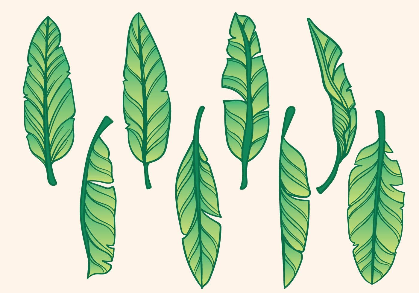 banana tree leaves vector - photo #16