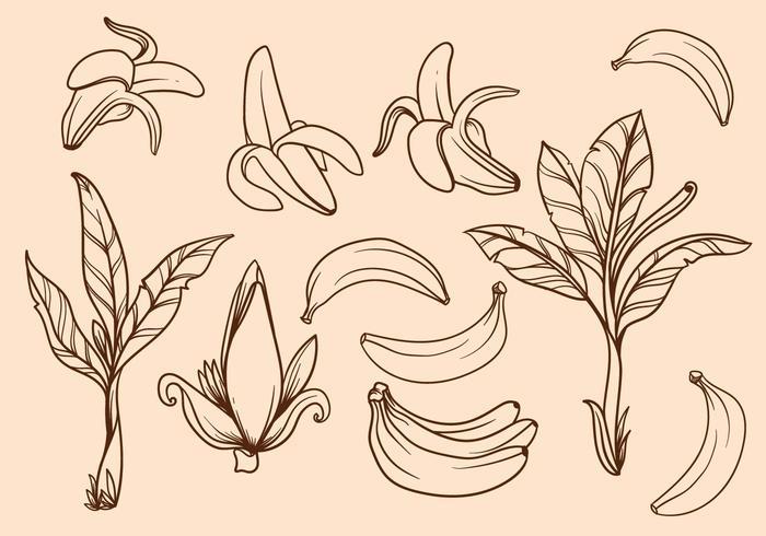 Mano libre dibujado vector del árbol de plátano