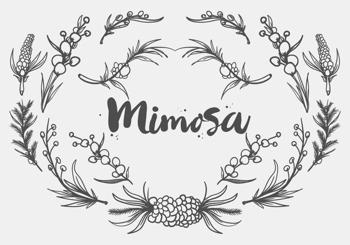 Mano libre dibujado vector planta Mimosa