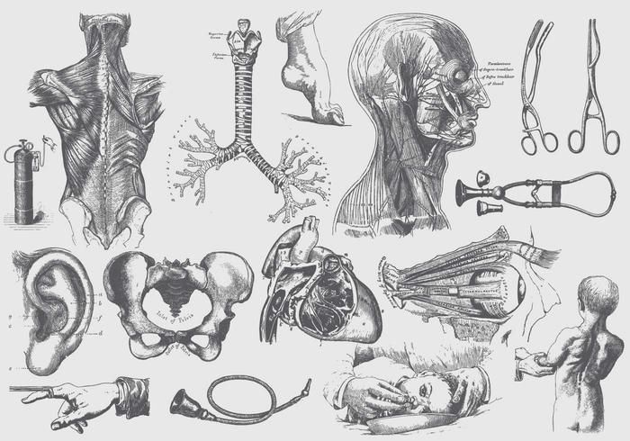 Grey Anatomy And Health Care Ilustraciones