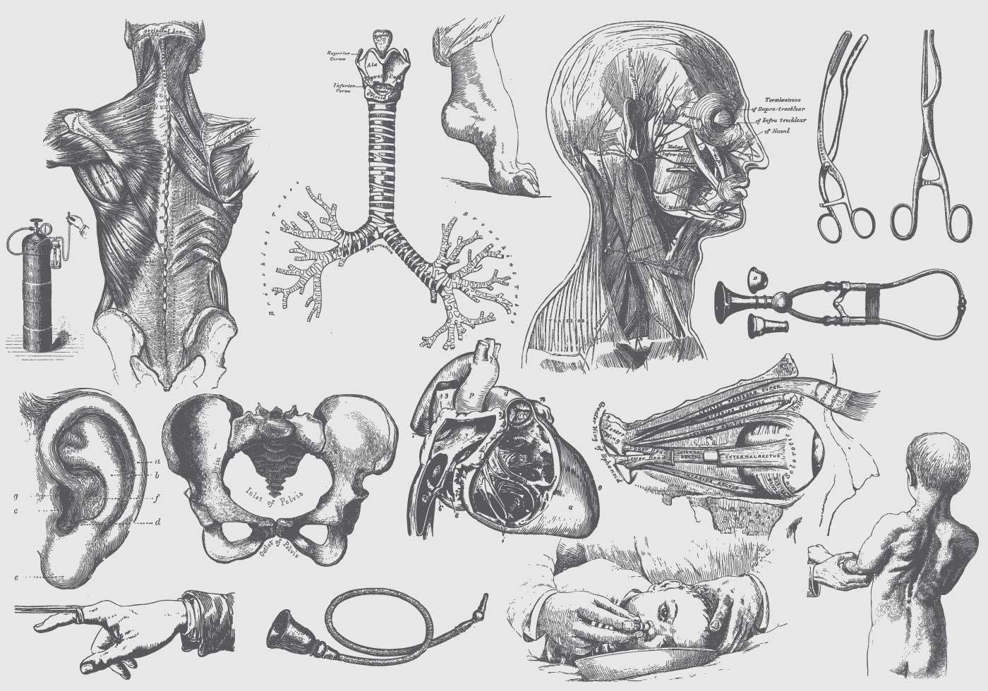 Grey Anatomy And Health Care Ilustraciones - Descargue Gráficos y ...