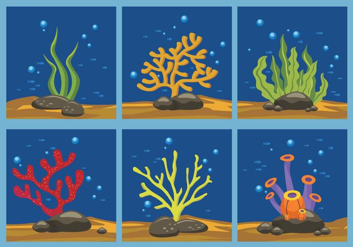 Seaweed color vector illustration