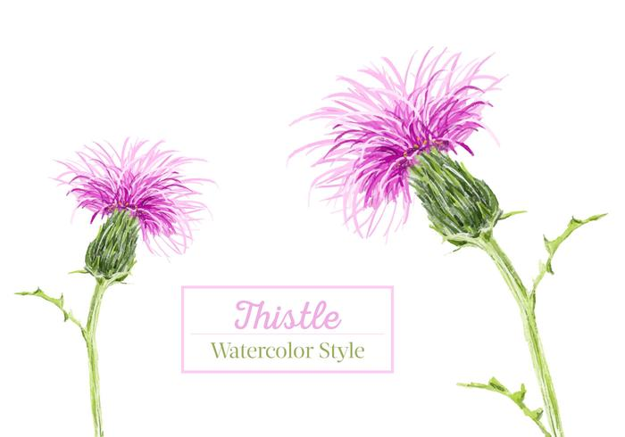 Free Thistle Watercolor Vector