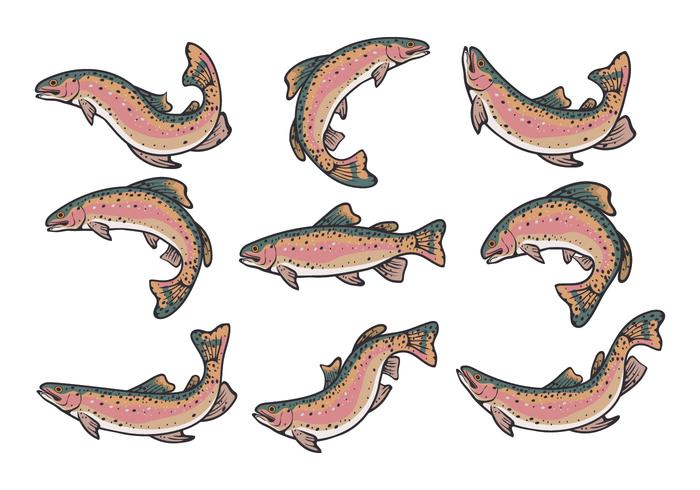 Rainbow Trout Vectors