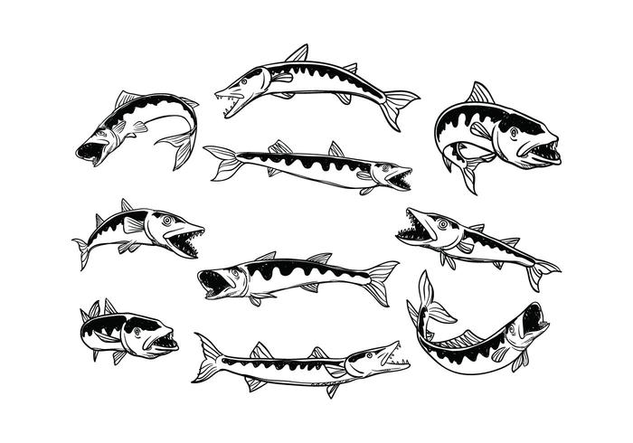Line Art Of Fish : Free barracuda vector download art stock graphics