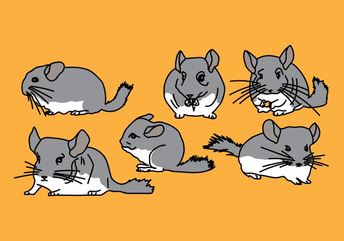 Chinchilla Vector Pack 3