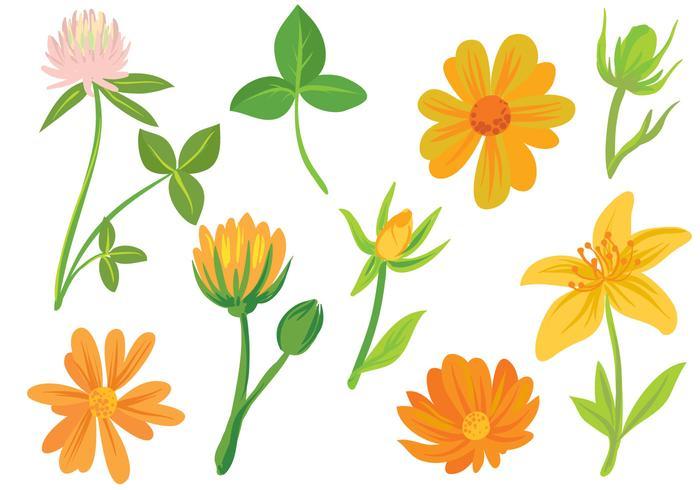 Free Flowers Vectors