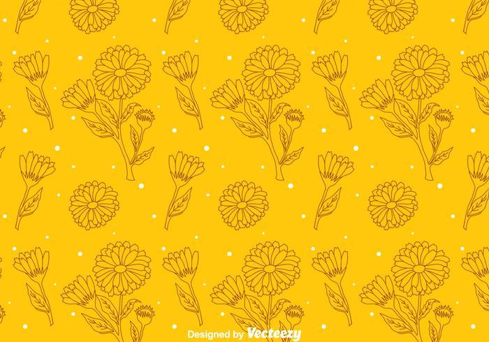 Calendula Orange Pattern