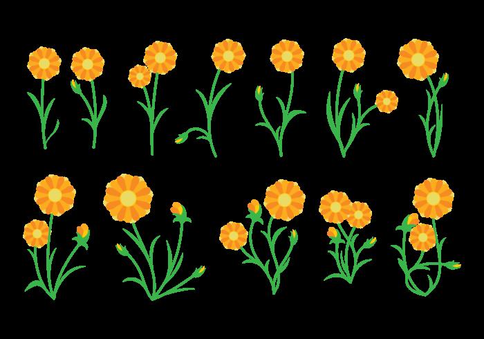 Vettore della pianta di calendula