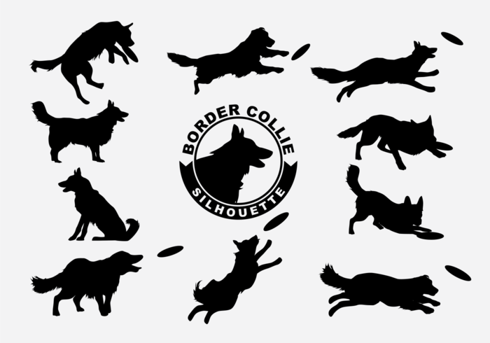 Border Collie Silhouette Vector