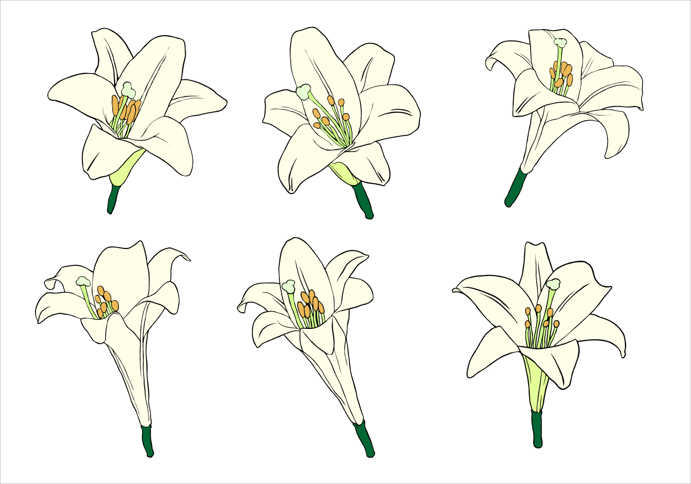 Easter Lily Free Vector - Download Free Vector Art, Stock ...