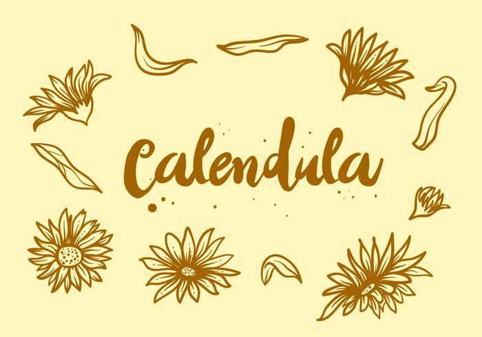 Gratis Calendula Flower vektor