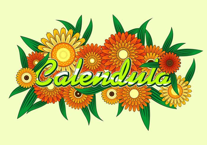 Calendula Free Vector