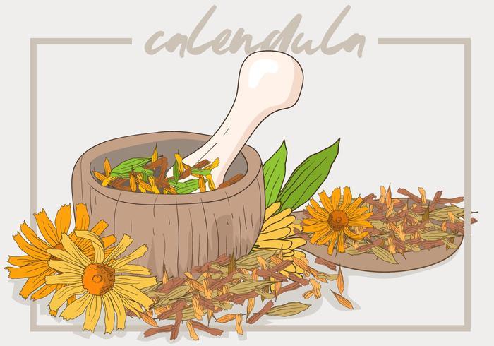 Calendula Cosmetische Recept