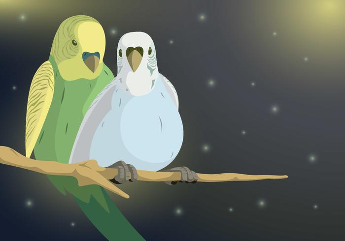 Budgie Couple Vector