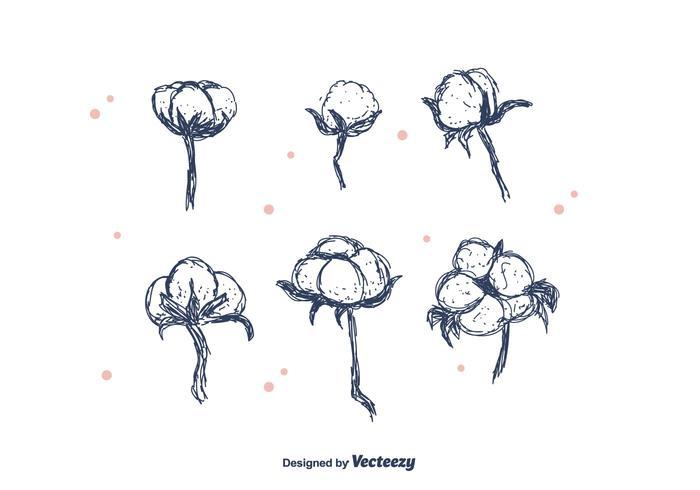 Flor de algodón dibujada a mano