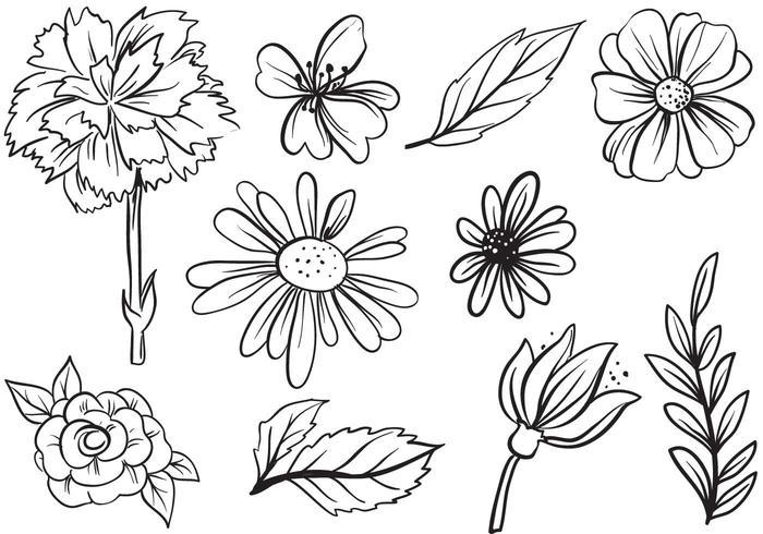Gratis blomma vektorer