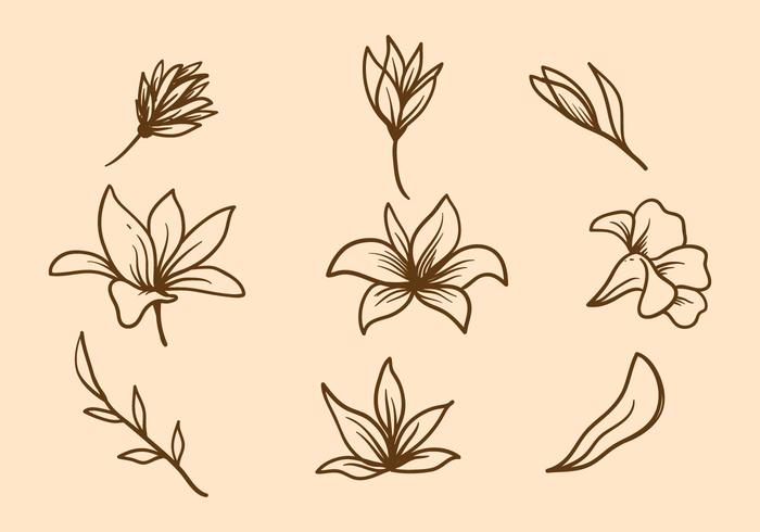 Easter Lily Vector