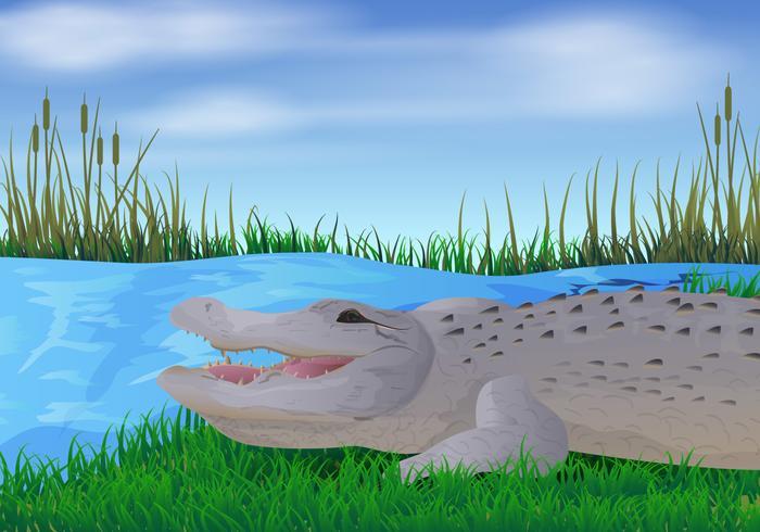 Gator In The River Illustration