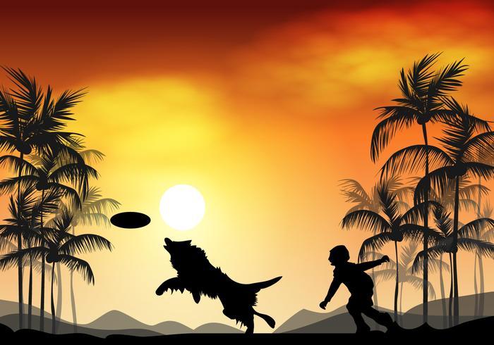 Border Collie Dog In Sunset