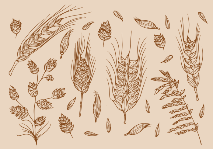Hand Drawn Sea Oats