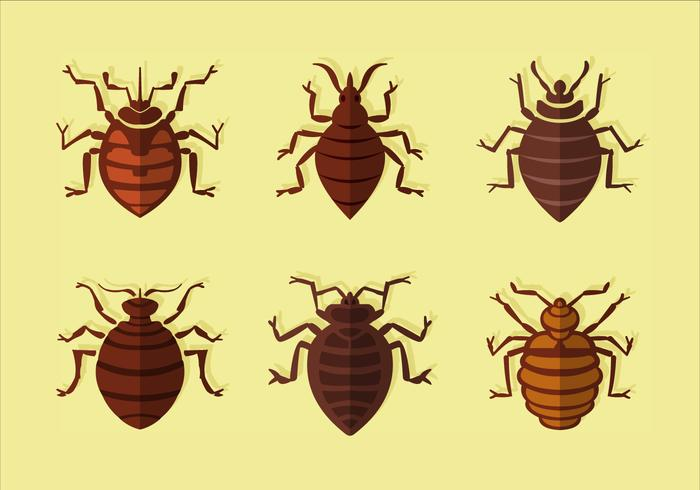Bed bug flat vector
