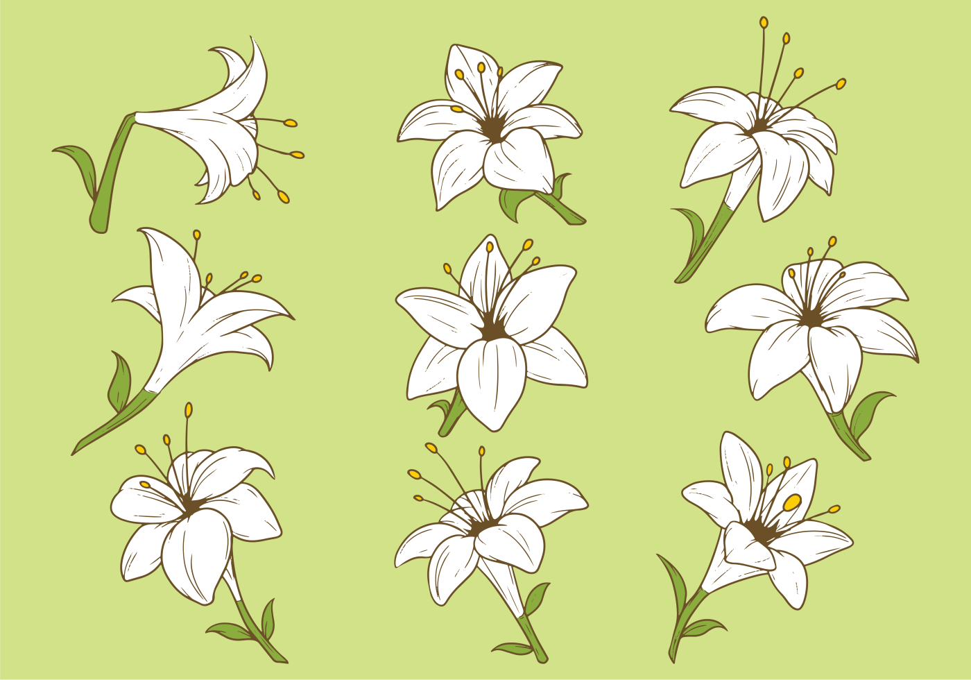 Easter Lily Plant Vector - Download Free Vector Art, Stock ...