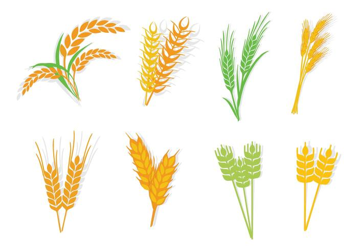 Different Type Oats Vector