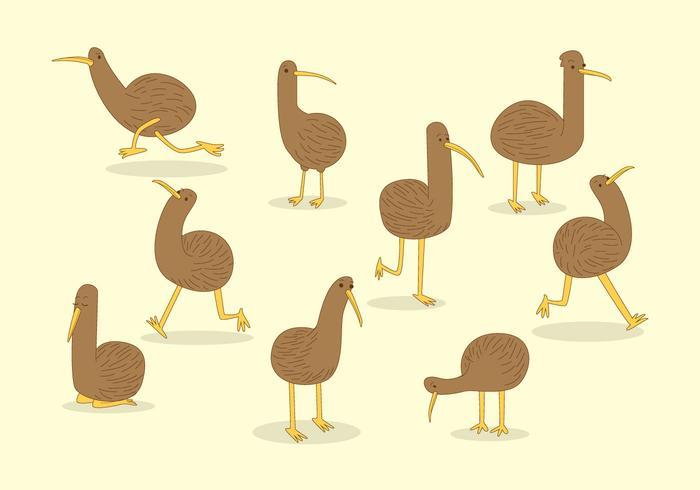 Vector de pássaro Kiwi grátis