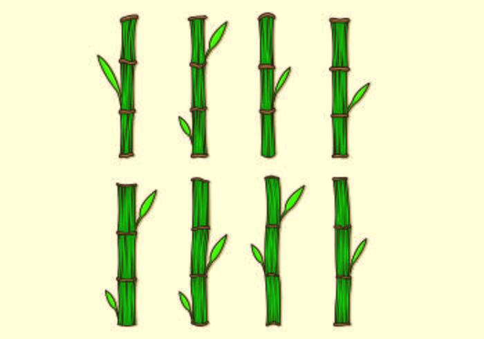 Set Of Bamboo Vectors