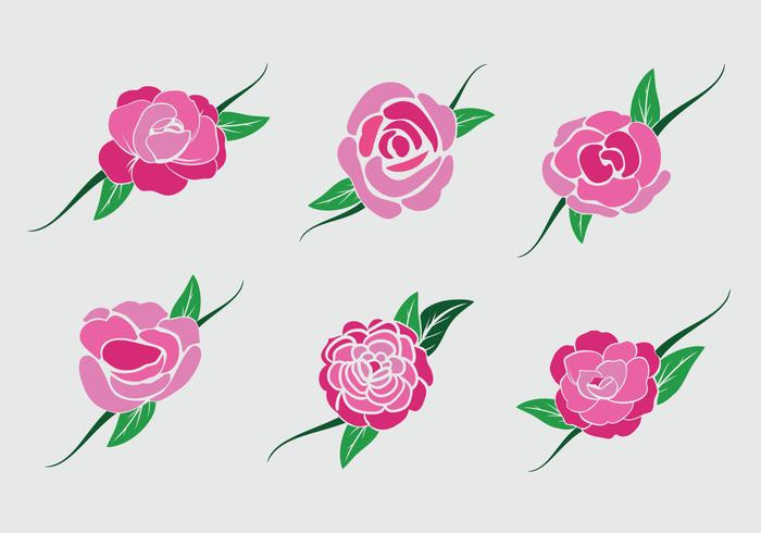 Pink camellia flower vector stock