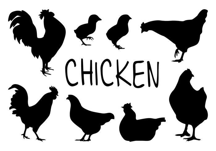 Los vectores de la silueta de pollo