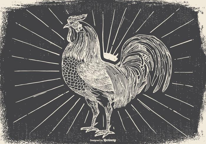 Vintage Rooster Illustration - Download Free Vector Art ...