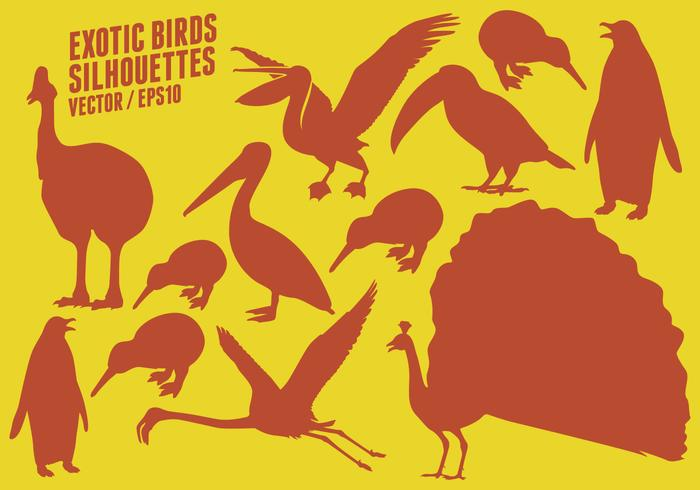 Exotic Birds Silhouettes