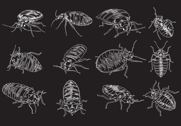 Bed Bug Illustration Set