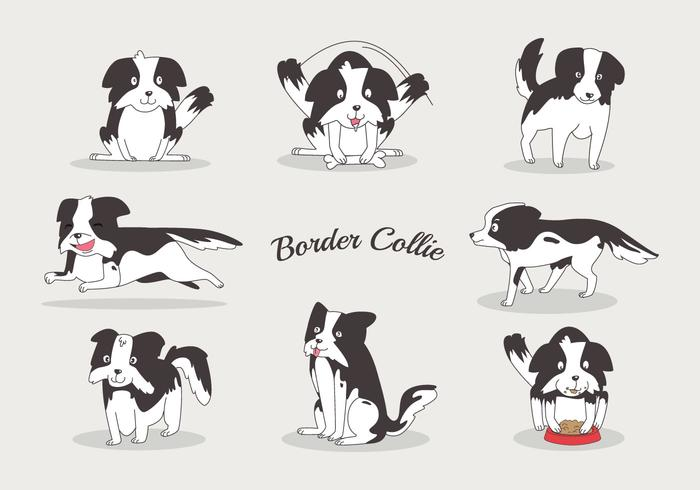 Free Border Collie Vectors