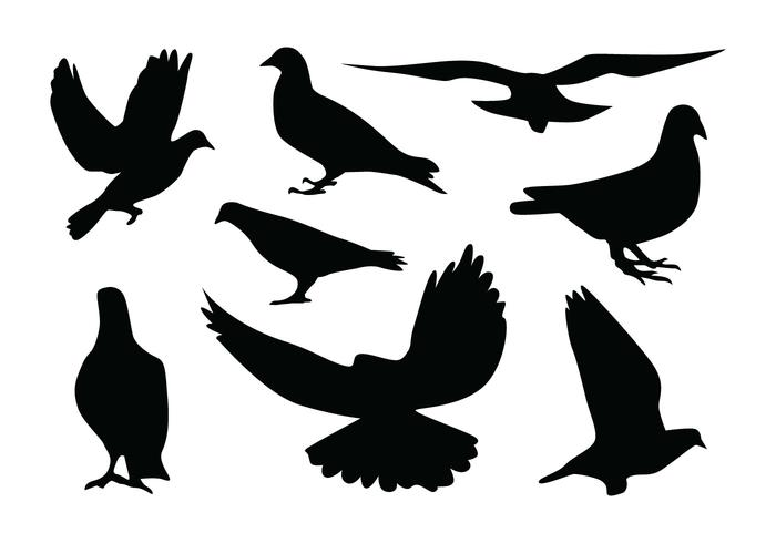 Pigeon Silhouette Vectors