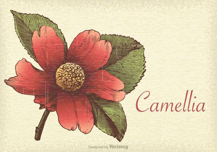 Ilustración vectorial Retro Camelia Libre
