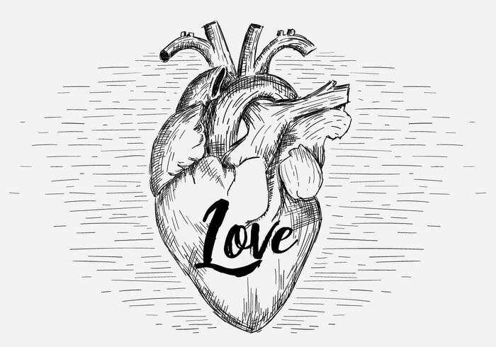 Free Vector Heart Illustration