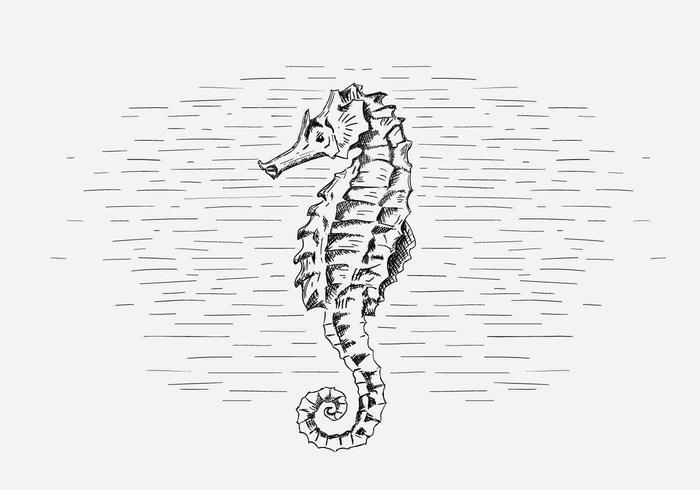Free Vector Seahorse Illustration