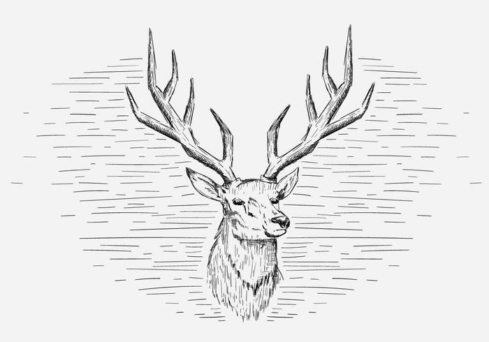 Free Vector Deer Illustration