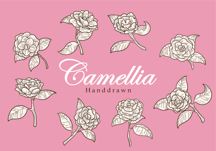 Free Hand Drawn Camellia Flower Vectors