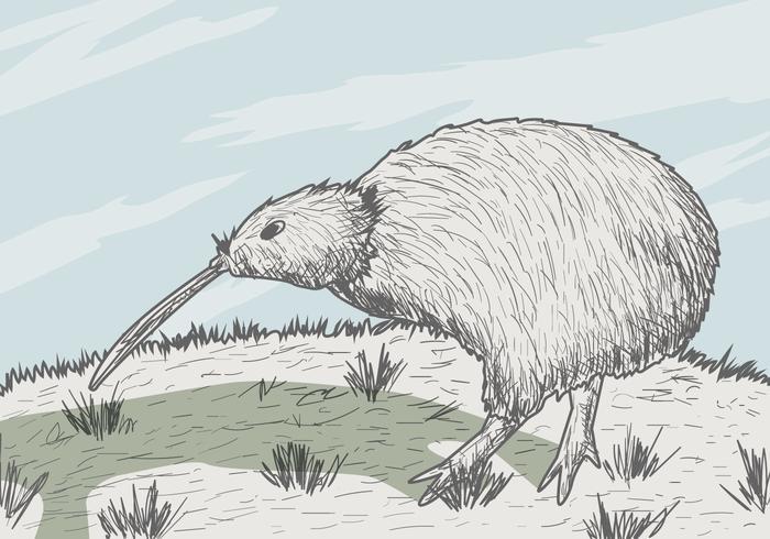 Vector Kiwi pássaro