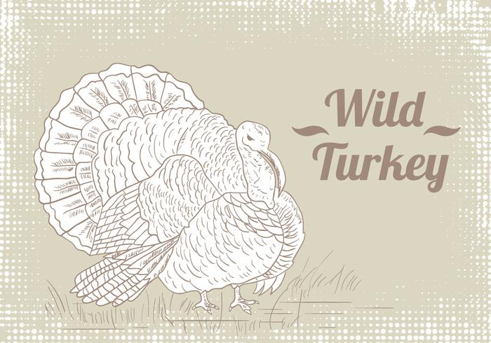 Wild Turkey Drawing Vector