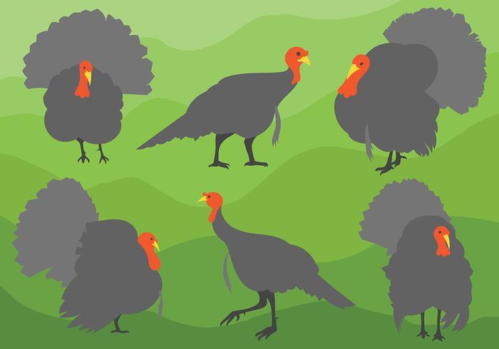 Free Wild Turkey Icons Vector
