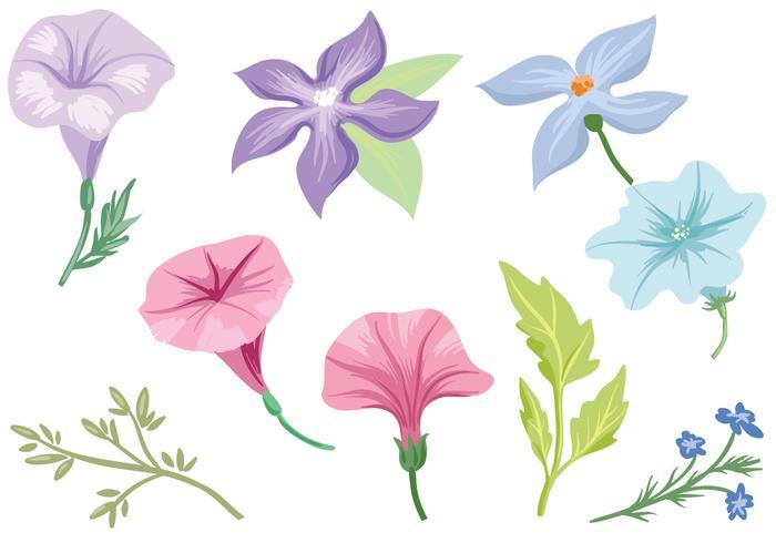 Free Petunia Vectors
