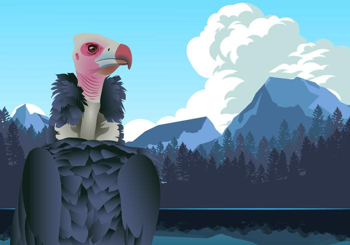 Andean Condor in Mountains Vector